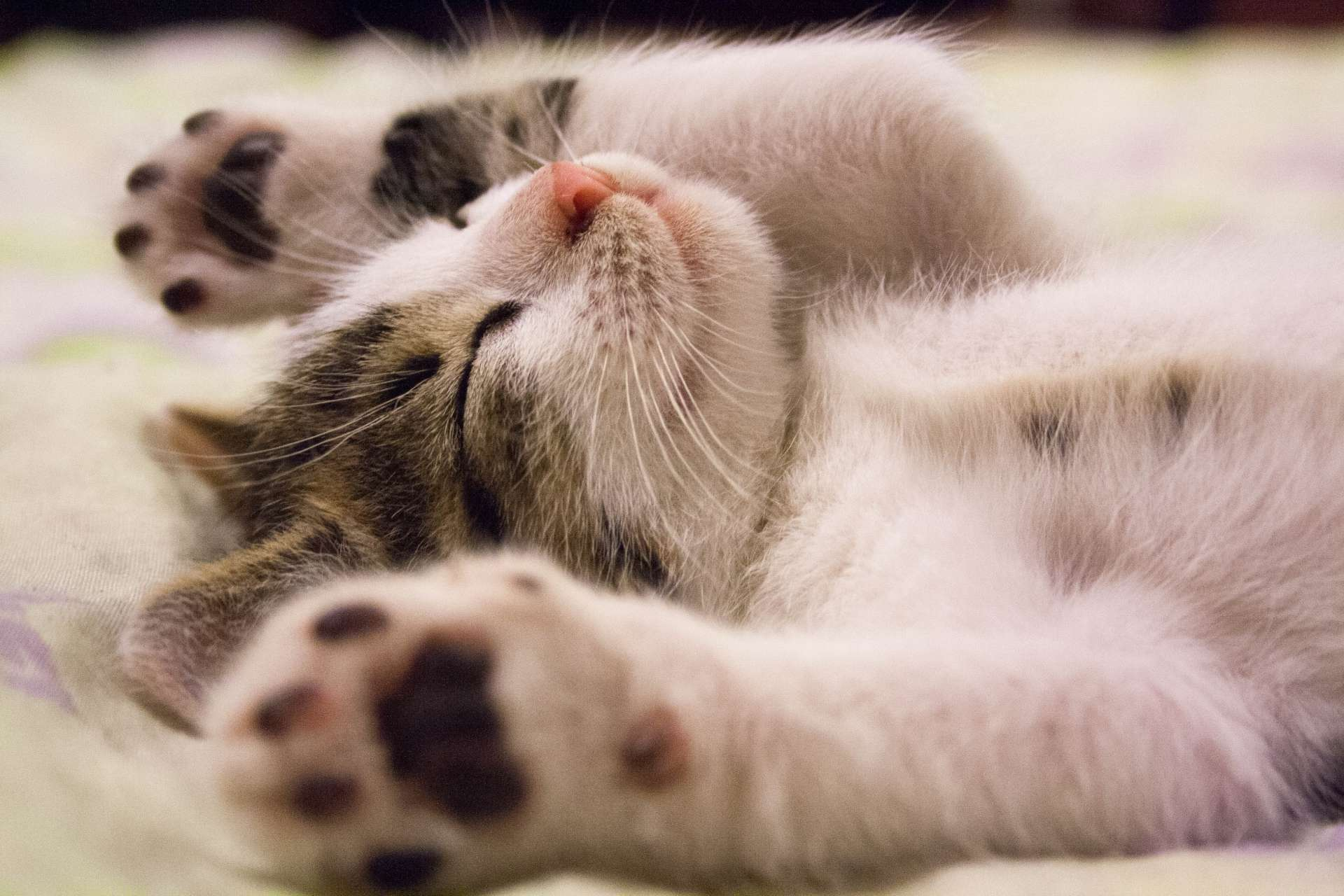 5c6997090886 Ασφάλιση Γάτας - Νο1 στις ειδικές ασφάλειες